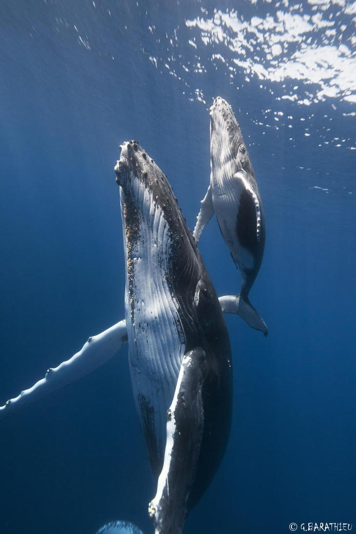 fotografii kitov 7
