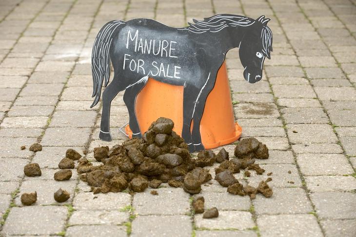 Лошадь и навоз