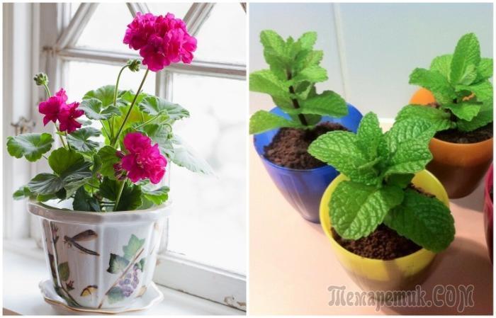 10 растений, которые отпугнут комаров и сделают лето лучше