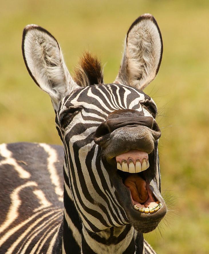 Смешные фотографии диких животных 39