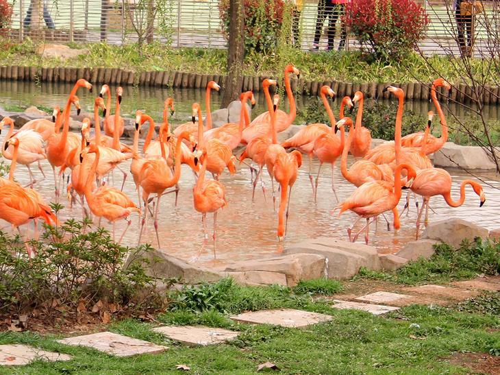 Зоопарк Ухани