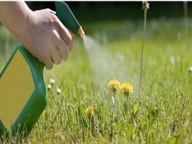 Кальцинированная сода применение в огороде