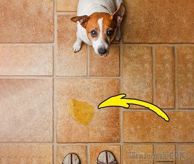 Ошибки, которые совершают все владельцы домашних животных