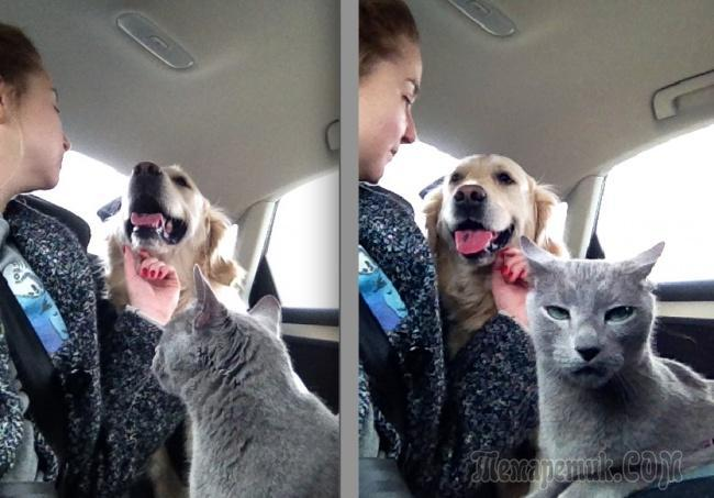 20 уморительных фото о том, как уживаются коты и собаки в одной семье