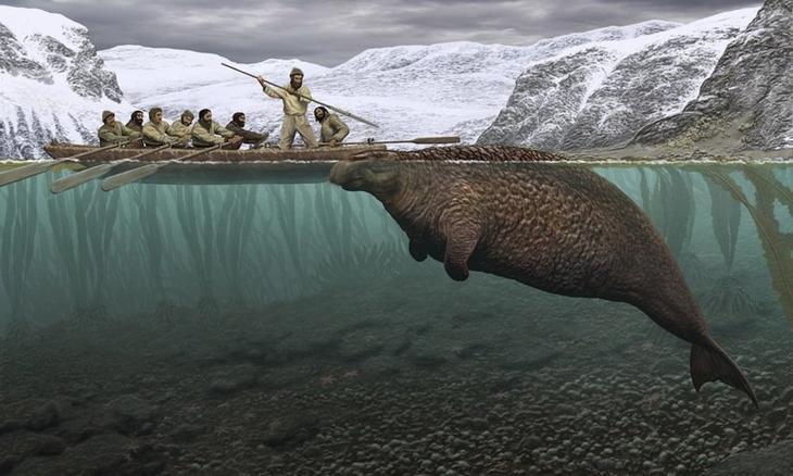 Морская корова животные, интересное, природа, человек