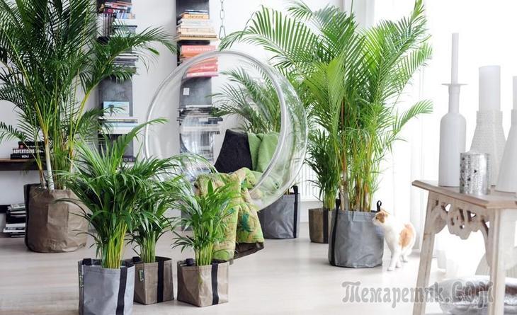 11 растений, очищающих воздух в квартире