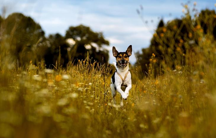 Фотографии собак - 11