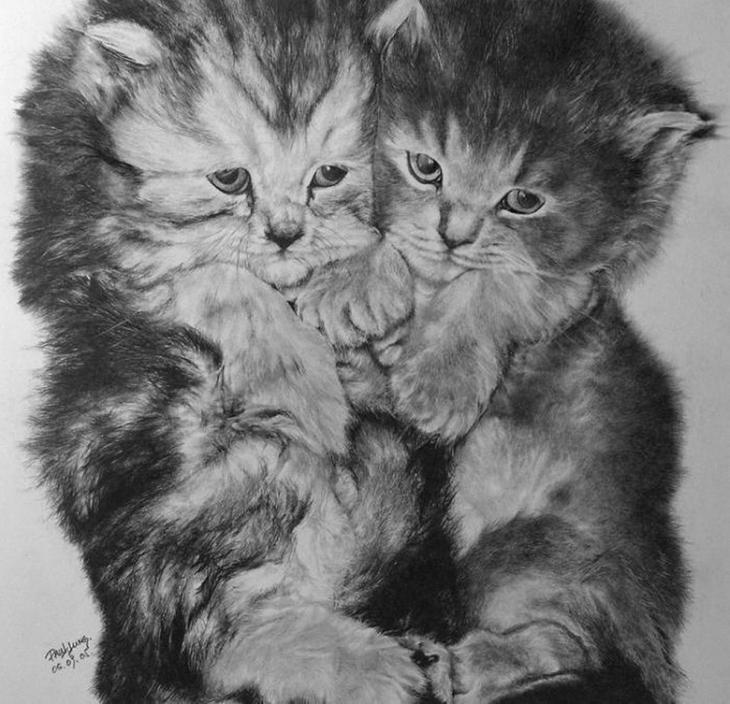 drawncats03 Мастер карандашного наброска   Пол Ланг