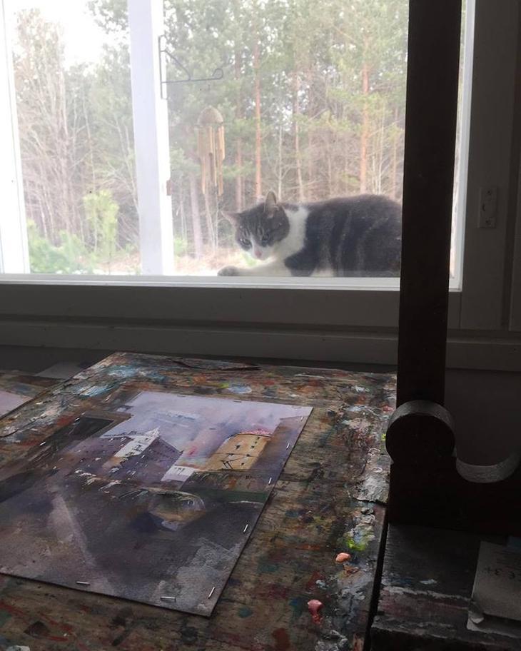 Ðа данном иÐображении может находитьÑÑ: кот