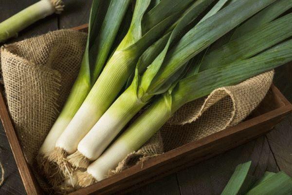 Как вырастить лук порей из семян в открытом грунте