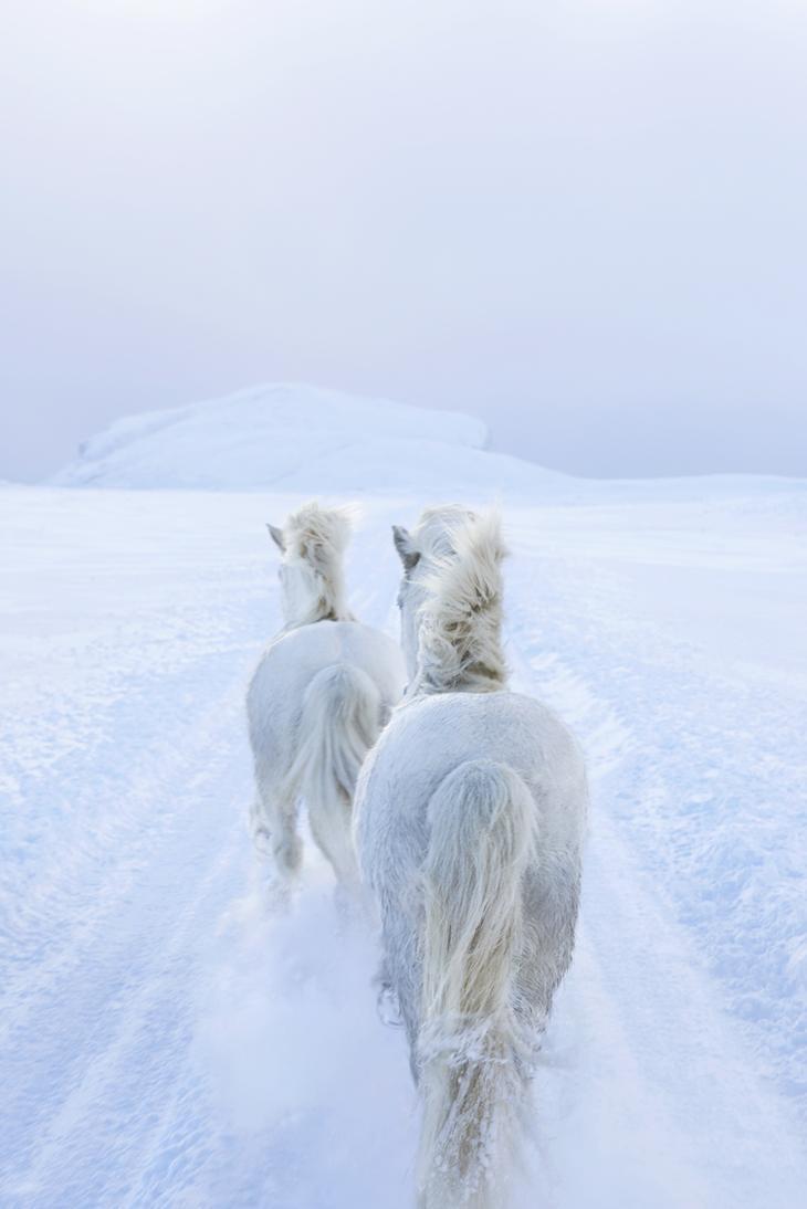 loshadi-Islandii-fotograf-Dryu-Doggett 12