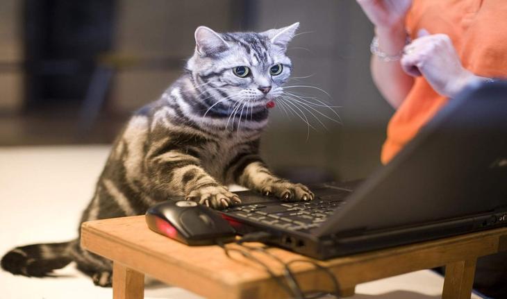 Чем заняться за компьютером, если вам скучно: 22 отличных способа отвлечься