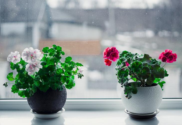 Периоды жизни комнатных растений: период роста и период покоя