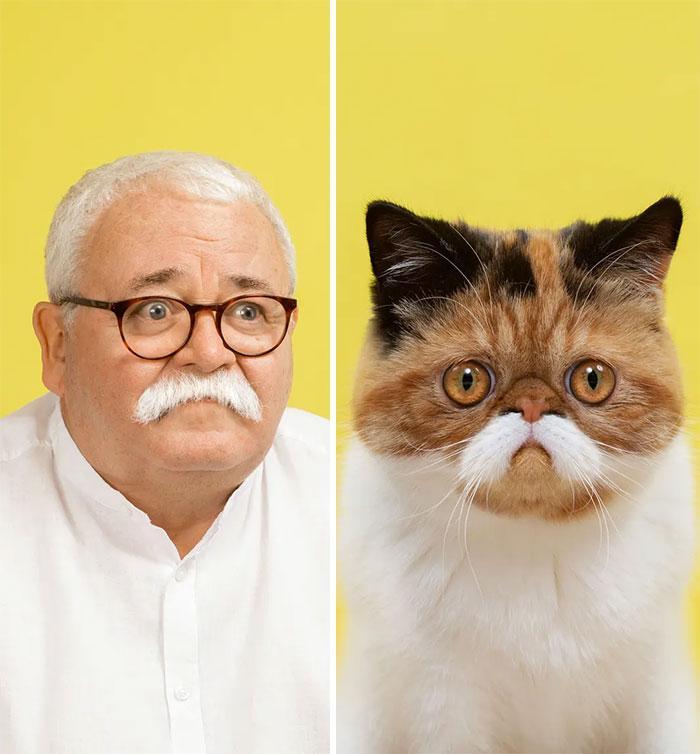 15 кошек и их двойников среди людей, доказывающих, что не такие уж мы и разные