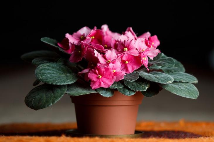 Домашние комнатные цветущие цветы