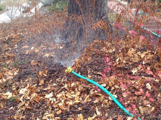 Зачем поливать сад осенью и как это лучше сделать