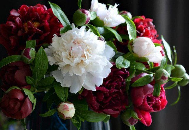 Невероятно реалистичные фарфоровые цветы от Олеси Галущенко