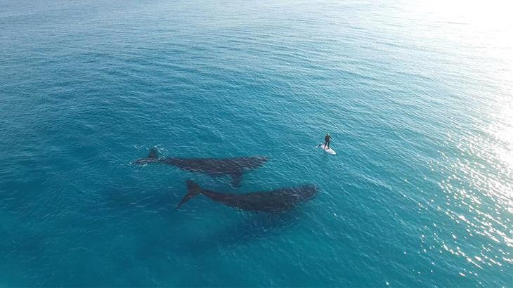 fotografii kitov 4