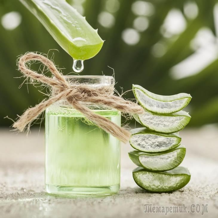 Маска для лица с алоэ в домашних условиях от морщин: как использовать сок