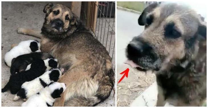 «Онамечтала ихнакормить!» Собака бродила поулицам седой ворту, разыскивая потерянных щенков