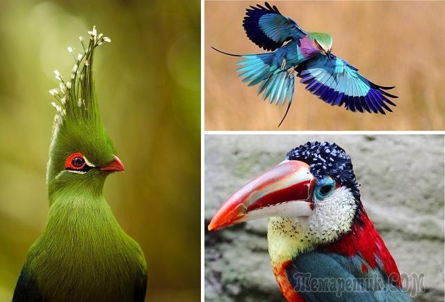 Удивительные виды птиц, о которых вы даже не слышали