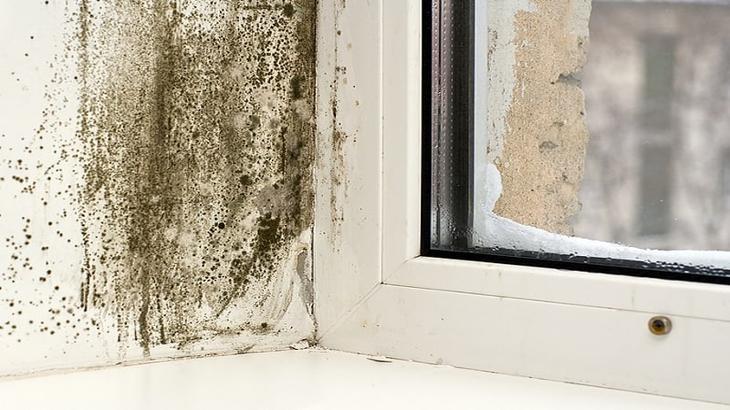 Плесневеют откосы на окнах