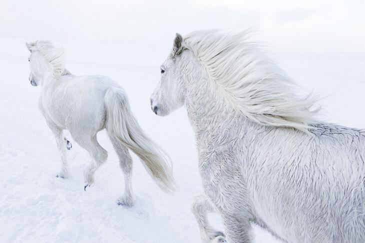 loshadi-Islandii-fotograf-Dryu-Doggett 8