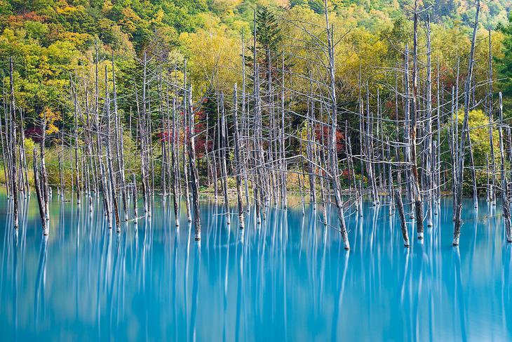 Голубой пруд Биэй в Японии осенью. Красивое фото