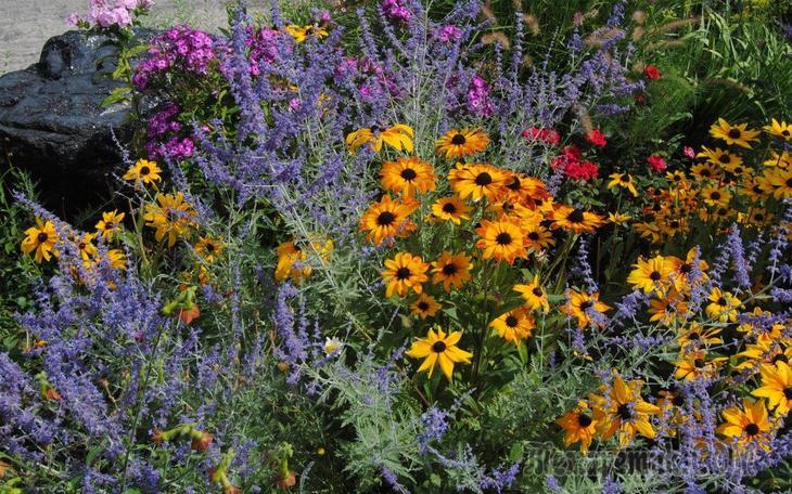 Многолетние цветы высаживаемые осенью
