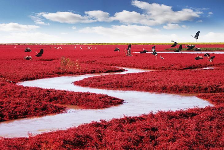 Китай, красный пляж Паньцзинь