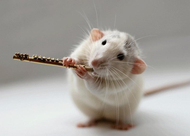 Крыса играет на флейте. Эллен ван Дилен. Фото
