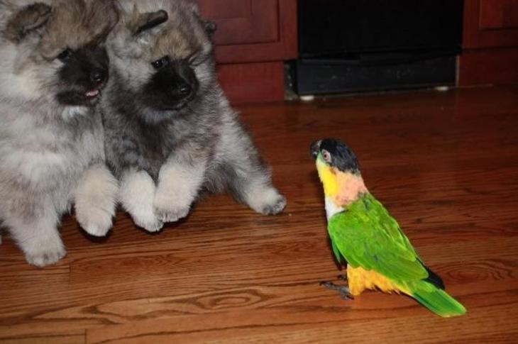 смешные страхи животных, животные столкнувшиеся со страхами, смешные боящиеся животные, смешные напуганные животные