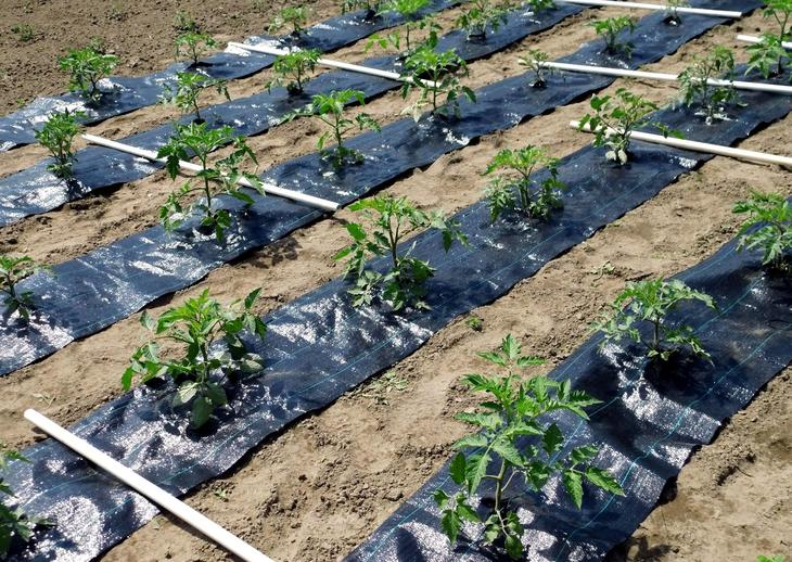агроткань от сорняков, агроткань применение, агроткань использование, агроткань для клубники, агроткань для мульчирования,