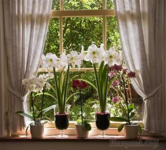 Цветы на подоконнике: особенности выращивания и ухода в разное время года