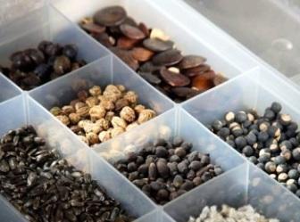 Как правильно собирать и хранить семена растений