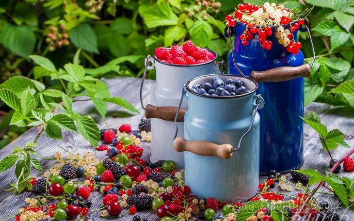 Создаем фундамент для хорошего ягодного урожая