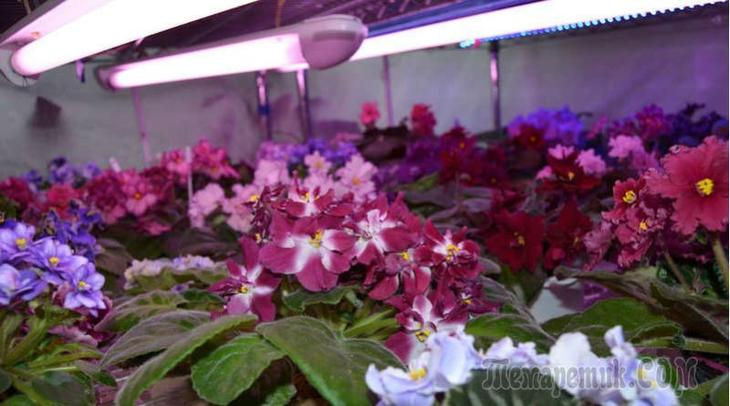 Чем подсвечивать комнатные растения