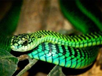 Десять самых ядовитых змей на планете
