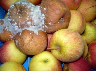 Болезни свежих овощей и плодов