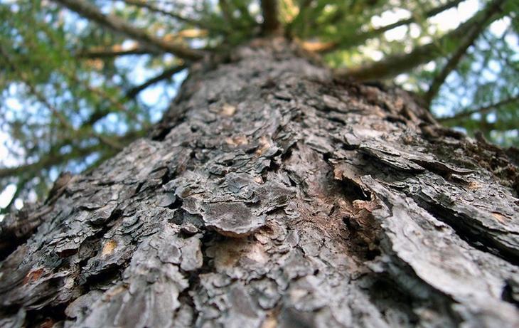 Применение декоративной древесной щепы в ландшафтном дизайне